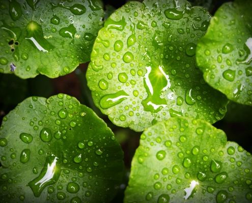 natural sustainable coatings on leaves