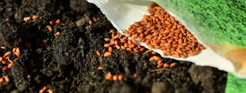 seed coating singapore improving plant quality